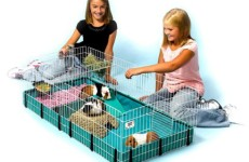 A Guide to Finding the Best Guinea Pig Cages