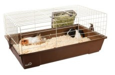 Guinea Pig Cages: Should They Be Kept Indoor or Outside the House?