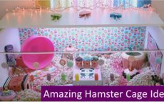 Amazing Hamster Cage Ideas That Will Blow Your Mind