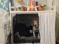 Everything You Need to Know about Dogs and Cages