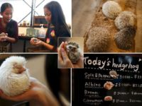 """A board shows a selection of hedgehogs for sale at the Harry hedgehog cafe in Tokyo, Japan, April 5, 2016.  In a new animal-themed cafe, 20 to 30 hedgehogs of different breeds scrabble and snooze in glass tanks in Tokyo's Roppongi entertainment district. Customers have been queuing to play with the prickly mammals, which have long been sold in Japan as pets. The cafe's name Harry alludes to the Japanese word for hedgehog, harinezumi. Prices are shown in yen.  REUTERS/Thomas Peter SEARCH """"HEDGEHOG THOMAS"""" FOR THIS STORY. SEARCH """"THE WIDER IMAGE"""" FOR ALL STORIES"""