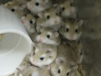Where to Keep a Hamster