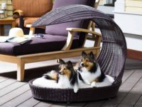 Dog Loungers for Different People's Needs