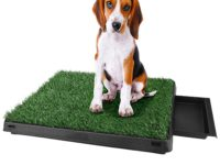 Best Dog Potty Grass for Your and Pet's Convenience