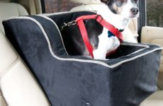 Keep Your Pet Safe While on the Road with a Dog Console Car Seat