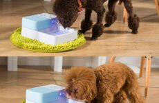 Give Your Dog Fresh Clean Water With Automatic Dog Waterer
