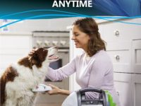 Make Doggie Bath Time More Pleasant with Dog Bathing Systems