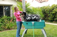 Dog Bath Tub Ideas for Ease and Convenience