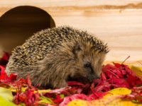 Hedgehog Cage Accessories – The Complete List