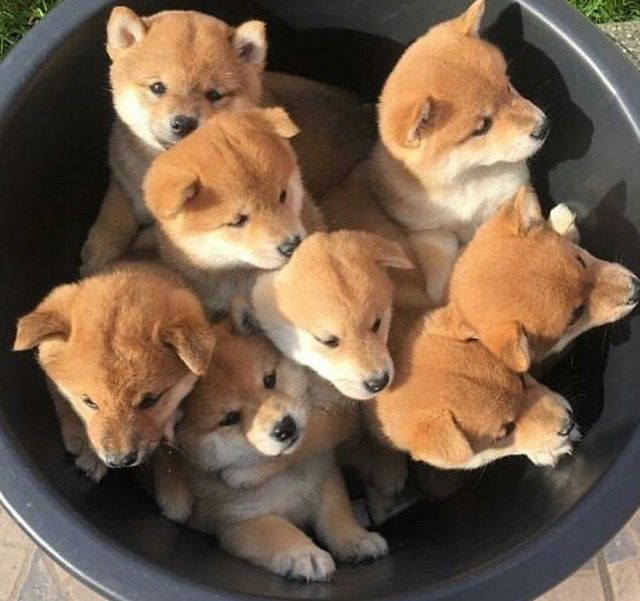 Whelping Box For Dogs | All Pet Cages