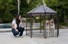 Outdoor Dog Pen: Let Your Furry Friend Play Freely Without Leash