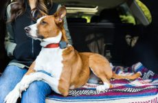 Best Dog GPS Trackers and Why You Should Get One For Your Dog