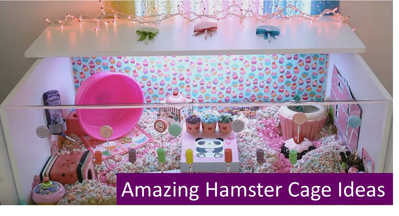 amazing-hamster-cage-ideas – All Pet Cages